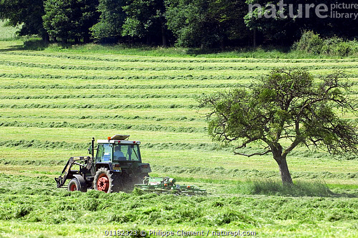 Tractor with mower cutting grass for hay, Luxembourg  ,  AGRICULTURE,EUROPE,HARVESTING,LANDSCAPES,LUXEMBOURG  ,  Philippe Clement