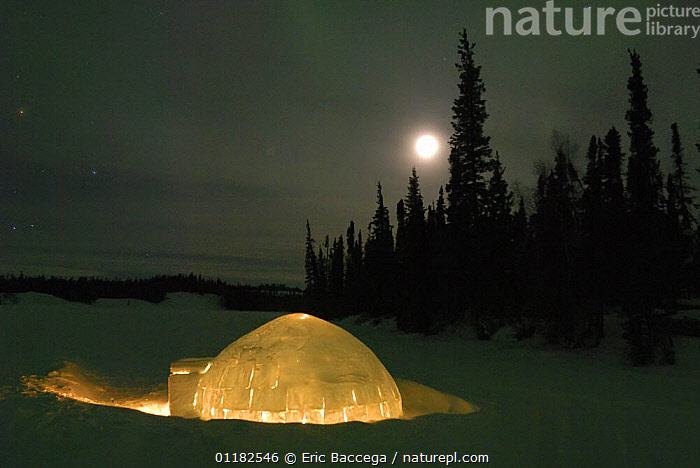 Igloo with lights at night by moonlight, Northwest Territories, Canada March 2007  ,  BUILDINGS,CANADA,CONIFEROUS,FORESTS,HOMES,ICE,MOON,NIGHT,NORTH AMERICA,PEOPLE,SNOW,TAIGA,TREES,WINTER,Plants  ,  Eric Baccega