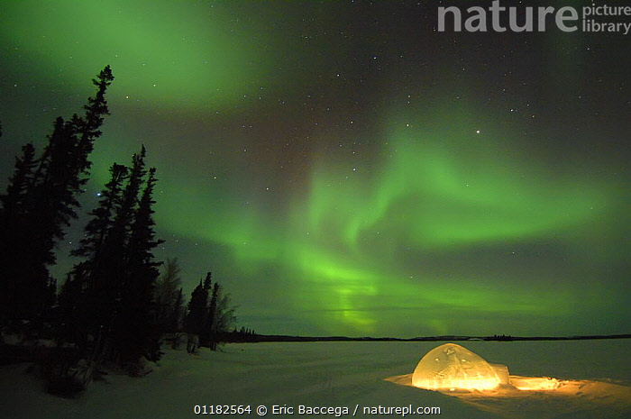 Igloo lit up at night under northern lights (Aurora borealis) Northwest Territories, Canada March 2007  ,  BUILDINGS,FORESTS,LANDSCAPES,LIGHTS,NIGHT,PEOPLE,SKIES,SNOW,TAIGA,TREES,WINTER,Plants  ,  Eric Baccega