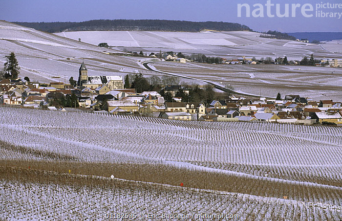 The village of Oger in winter, C�te de Blancs vineyard, Champagne country, France  ,  AGRICULTURE,BUILDINGS,EUROPE,LANDSCAPES,SNOW,VINEYARDS  ,  Eric Baccega