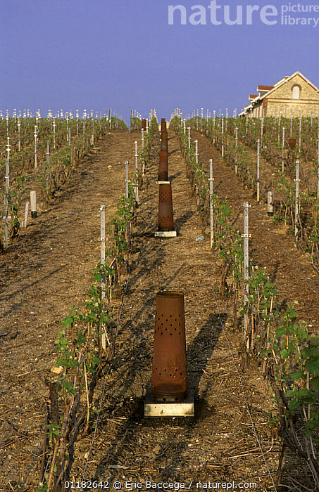 Vineyard heaters to protect stocks from early spring frost, Chouilly, C�te de Blancs vineyard, Champagne country, France  ,  AGRICULTURE,COLD,EUROPE,INTERESTING,VERTICAL,VINEYARDS,WARM  ,  Eric Baccega