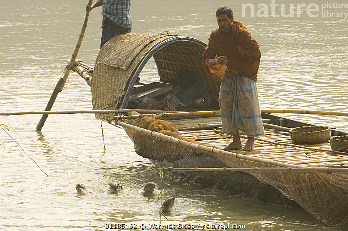 Traditional fishermen on boat using Smooth indian river otters {Lutra perspicillata} to catch fish,  rewarding otters by feeding them with fish, Ganges/Brahmaputra delta, Sunderbans, Bangledesh  ,  ASIA,BEHAVIOUR,BOATS,CARNIVORES,MAMMALS,OTTER,OTTERS,PEOPLE,RIVERS,TRADITIONAL,WORKING,INDIAN-SUBCONTINENT  ,  Warwick Sloss