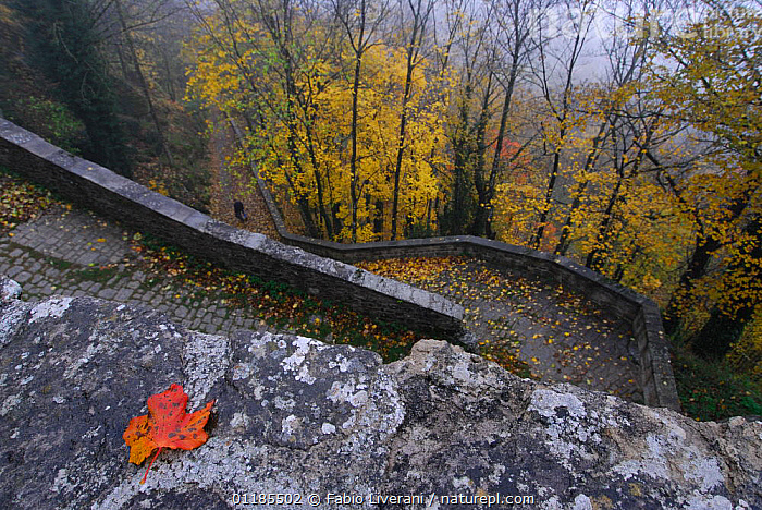 Man walking down a steep path at the Sanctuaries of San Francesco di Assisi in the Foreste Casentinesi, Monte Falterona, Campigna: a millenary forest in the Apennines of Tuscany and Romagna, Italy  ,  AUTUMN,EUROPE,FORESTS,LANDSCAPES,LEAVES,TREES,walls,Plants,Apennines,Appennines,  ,  Fabio Liverani