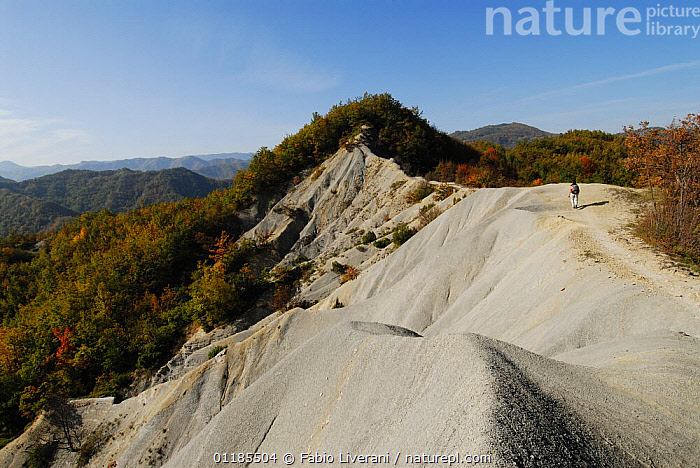 Walking along a ridge on Petrose Mountain in the Foreste Casentinesi, Monte Falterona, Campigna: a millenary forest in the Apennines of Tuscany and Romagna, Italy  ,  AUTUMN,EUROPE,FORESTS,GEOLOGY,LANDSCAPES,LEISURE,MOUNTAINS,PEOPLE,TREES,Plants,Apennines,Appennines,  ,  Fabio Liverani
