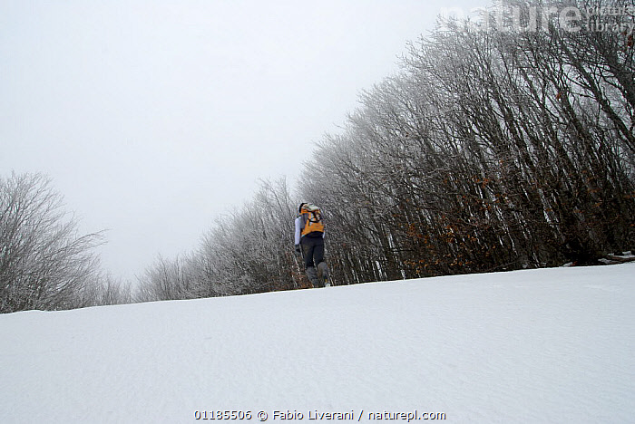 Walking in the snow in the Foreste Casentinesi, Monte Falterona, Campigna: a millenary forest in the Apennines of Tuscany and Romagna, Italy  ,  EUROPE,PEOPLE,SNOW,TREES,WINTER,Plants,Apennines,Appennines,  ,  Fabio Liverani