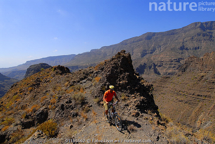 Cyclist in the Barranco de Tirajana, Gran Canaria Island, the Canary Isles, Spain, September 2007  ,  ATLANTIC ISLANDS,BIKING,CANARIES,CANYONS,CYCLING,GEOLOGY,LANDSCAPES,LEISURE,MOUNTAINS,TOURISM,VALLEYS,Europe  ,  Fabio Liverani