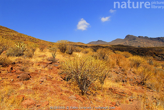 Barranco de Tirajana, Gran Canaria Island, the Canary Isles, Spain, September 2007  ,  ARID,ATLANTIC ISLANDS,BUSH,CANARIES,DESERTS,LANDSCAPES,MOUNTAINS,SCRUBLAND,VALLEYS,Europe  ,  Fabio Liverani