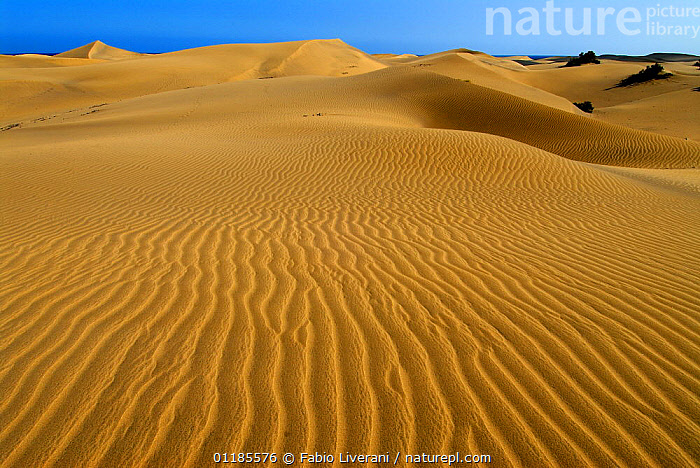 Dune di Maspalomas, Gran Canaria, Canary Isles, Spain, September 2007  ,  ATLANTIC ISLANDS,CANARIES,DESERTS,LANDSCAPES,PATTERNS,RESERVE,SAND DUNES,Europe  ,  Fabio Liverani