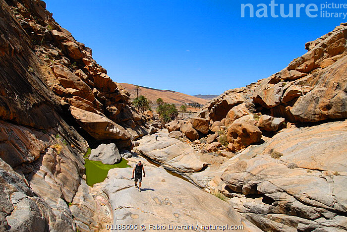 Man walking through the Las Penitas rural park of Betancuria, Fuerteventura, Canary Isles, Spain, September 2007  ,  ARID,ATLANTIC ISLANDS,CANARIES,DRY,GEOLOGY,GULLIES,LANDSCAPES,PEOPLE,RESERVE,ROCKS,VALLEYS,Europe  ,  Fabio Liverani