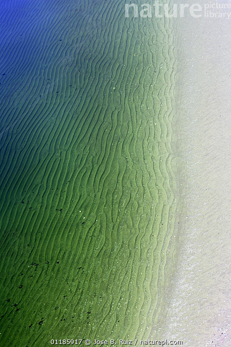Water from the R�o Tinto, or Red River, very acidic and coloured by minerals dissolved in the water that drains from the local Riotinto mines causing severe environmental problems. Huelva, Spain  ,  BLUE,EUROPE,GREEN,LANDSCAPES,MINERALS,POLLUTION,RIVERS,SPAIN,VERTICAL,WATER,Catalogue1  ,  Jose B. Ruiz