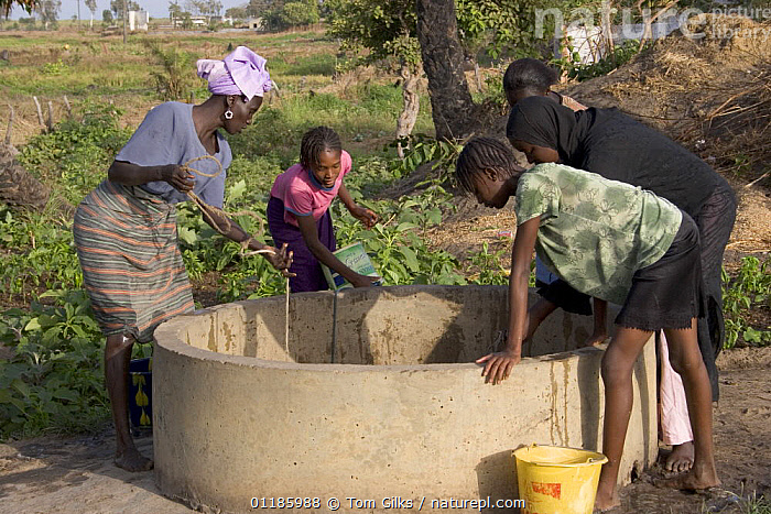 Women drawing water from well to water their crops, Bakau rice fields, Gambia, 2007  ,  AFRICA,PEOPLE,WATER,WEST AFRICA,WORKING  ,  Tom Gilks