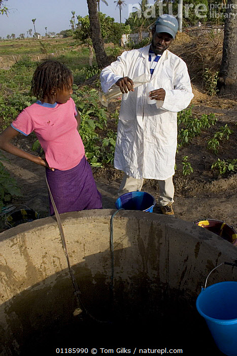 Scientist testing water purity at well, Bakau rice fields, Gambia (Reconstruction) 2007  ,  AFRICA,HEALTH,PEOPLE,SCIENCE,VERTICAL,WATER,WEST AFRICA  ,  Tom Gilks