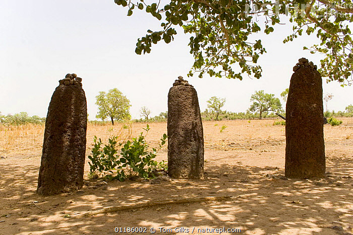 Wassu stone circles, Wassu, Constructed 500AD Gambia, 2007  ,  AFRICA,ANCIENT,HISTORIC,MONUMENT,ROCKS,WEST AFRICA,WEST-AFRICA  ,  Tom Gilks