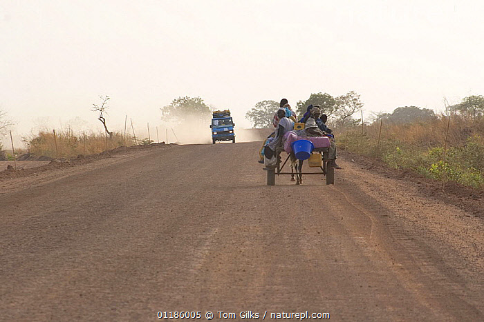 Donkey cart and truck travelling on dust road, near Farafenni, Gambia, 2007  ,  AFRICA,DUST,GAMBIA,ROADS,TRANSPORT,VEHICLES,WEST AFRICA,WEST-AFRICA  ,  Tom Gilks