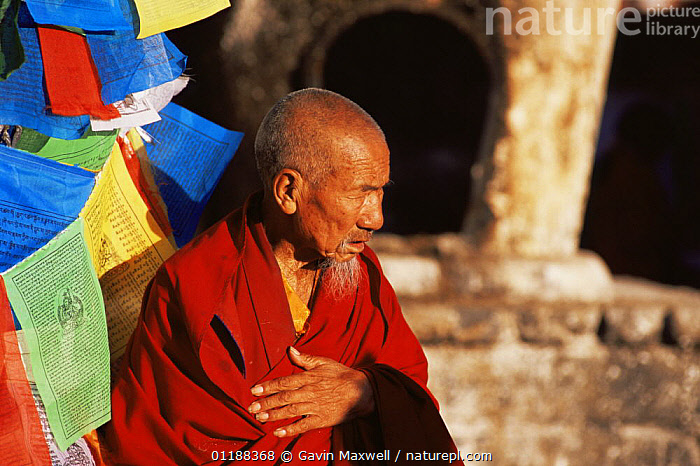 Pilgrim / Monk and prayer flags at Jokhang Temple, Lhasa, Tibet   2007  ,  ASIA,BUDDHISM,BUDDHIST,COLOURFUL,CULTURES,MAN,PEOPLE,PORTRAITS,PROFILE,TRADITIONAL,CHINA  ,  Gavin Maxwell