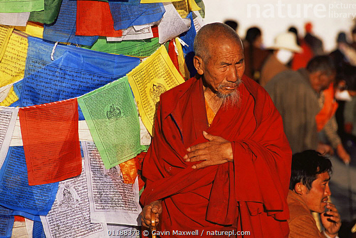 Pilgrim / Monk and prayer flags at Joklang Temple, Lhasa, Tibet 2007  ,  ASIA,BUDDHISM,BUDDHIST,CULTURES,OLD,PEOPLE,PORTRAITS,TRADITIONAL,CHINA  ,  Gavin Maxwell