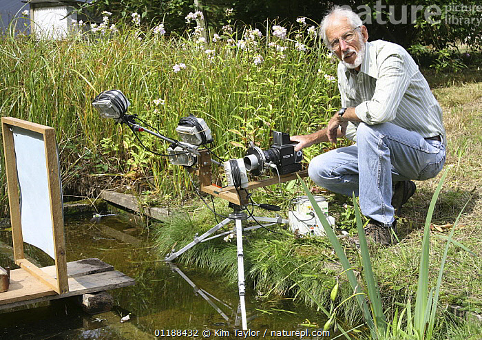 Photographer Kim Taylor setting up a fully automated system to photograph a dragonfly patrolling over a pond. Surrey, UK  ,  CAMERA,EUROPE,FLYING,GARDENS,INSECTS,PEOPLE,PHOTOGRAPHER,PONDS,UK,WILDLIFE,United Kingdom,Invertebrates,British  ,  Kim Taylor
