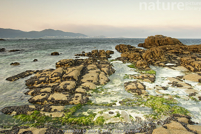Rocky coastline at Carnota, Costa da Morte, Galicia, Spain  ,  COASTS,EUROPE,LANDSCAPES,OCEAN,ROCKS,SEAWEED,SPAIN,Plants  ,  Jose B. Ruiz