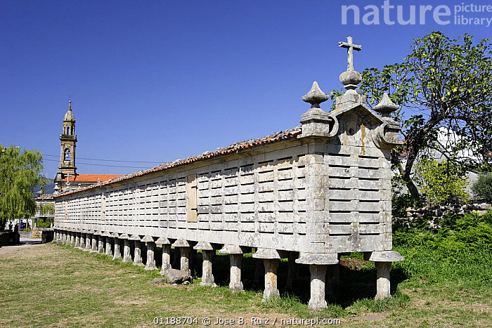 Horreo (traditional stone granary built on stilts to avoid access of rodents) in Carnota, Costa da Morte. This is the largest Horreo in Galicia, Spain.  ,  architecture,BUILDINGS,EUROPE,food store,LANDSCAPES,SIZE,SPAIN,TRADITIONAL  ,  Jose B. Ruiz