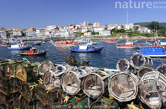 Crab / Lobster pots piled up on the harbourside in Finisterre fishing port Costa da Morte, Galicia, Spain  ,  BOATS,COASTS,EUROPE,FISHERIES,INDUSTRY,LANDSCAPES,SPAIN,TOWNS  ,  Jose B. Ruiz