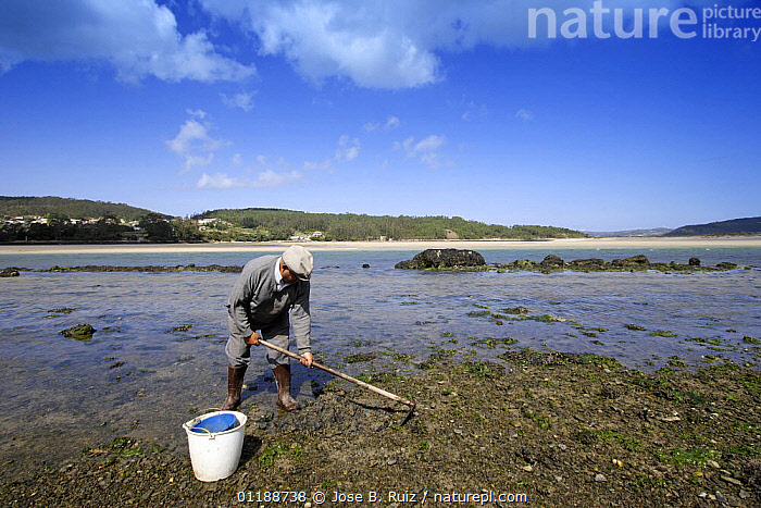 Man hoeing the mudflats in Ria de Corme y Laxe Estuary, Costa da Morte, Galicia, Spain  ,  COASTS,estuaries,EUROPE,FISHERIES,hoe,hoes,INDUSTRY,LANDSCAPES,PEOPLE,RIVERS,SPAIN,TRADITIONAL,WORKING  ,  Jose B. Ruiz