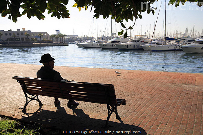Man sat on a bench overlooking boats in the harbour in Alicante, Spain  ,  BOATS,CITIES,EUROPE,LANDSCAPES,MEDITERRANEAN,PEOPLE,SILHOUETTES,SITTING,SPAIN,WATER  ,  Jose B. Ruiz