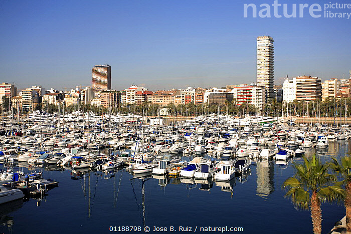 Boats in the harbour at Alicante, Spain  ,  BOATS,BUILDINGS,CITIES,COASTS,EUROPE,LANDSCAPES,MEDITERRANEAN,OCEAN,PALMS,REFLECTIONS,SPAIN,URBAN  ,  Jose B. Ruiz