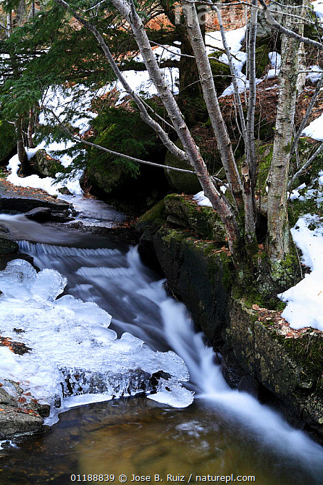 Partially frozen stream in Canencia, Madrid, Spain  ,  EUROPE,ICE,LANDSCAPES,RIVERS,SNOW,SPAIN,VERTICAL,WATER,WINTER,WOODLANDS  ,  Jose B. Ruiz