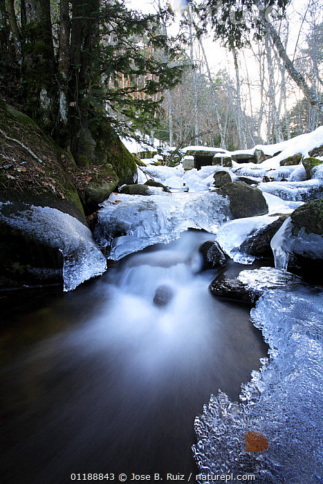 Partially frozen stream flowing through a wood in Canencia, Spain  ,  ARTY SHOTS,EUROPE,ICE,LANDSCAPES,LEAVES,RIVERS,SNOW,SPAIN,VERTICAL,WATER,WINTER,WOODLANDS,Catalogue1  ,  Jose B. Ruiz
