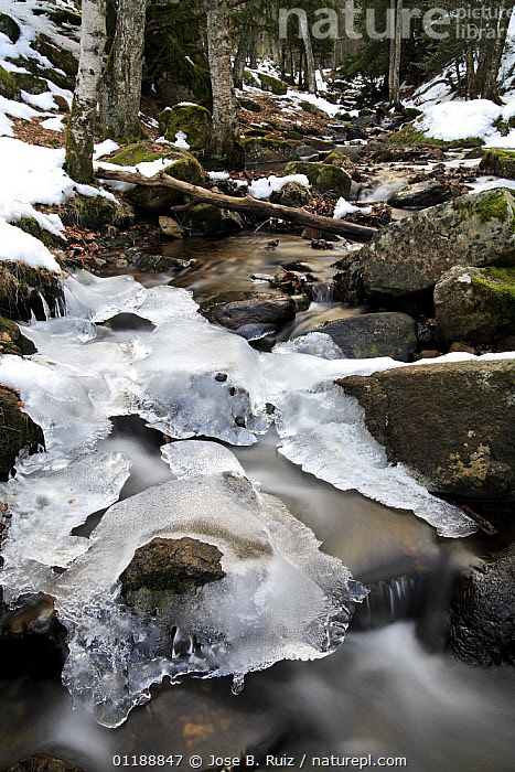 Partially frozen stream in Canencia, Spain  ,  EUROPE,ICE,LANDSCAPES,RIVERS,SNOW,SPAIN,VERTICAL,WATER,WINTER,WOODLANDS  ,  Jose B. Ruiz
