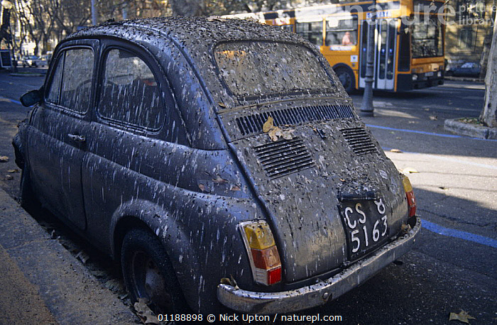 Fiat 500 car covered in droppings after parking beneath huge Common starling roost (Sturnus vulgaris) central Rome, Italy, 1997  ,  BIRDS,CITIES,EUROPE,EXCREMENT,FAECES,GUANO,ITALY,ROADS,STARLINGS,URBAN WILDLIFE,VEHICLES,VERTEBRATES  ,  Nick Upton