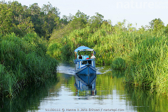 Tanjung Puting National Park, tourists on river boat, a klotok, Kalimantan, Borneo, Indonesia  ,  ASIA,BOATS,BORNEO,INDONESIA,LANDSCAPES,PEOPLE,RESERVE,RIVERS,TOURISM,SOUTH-EAST-ASIA  ,  Hanne & Jens Eriksen