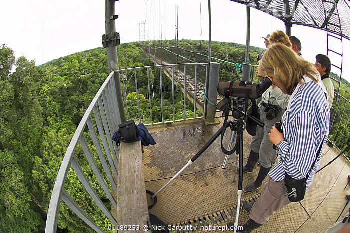 Tourists birdwatching from canopy tower. Rainforest of Napo River, Amazonia, Ecuador, 2007  ,  ECUADOR,FISH EYE,PEOPLE,SOUTH AMERICA,TOURISM,TROPICAL RAINFOREST  ,  Nick Garbutt