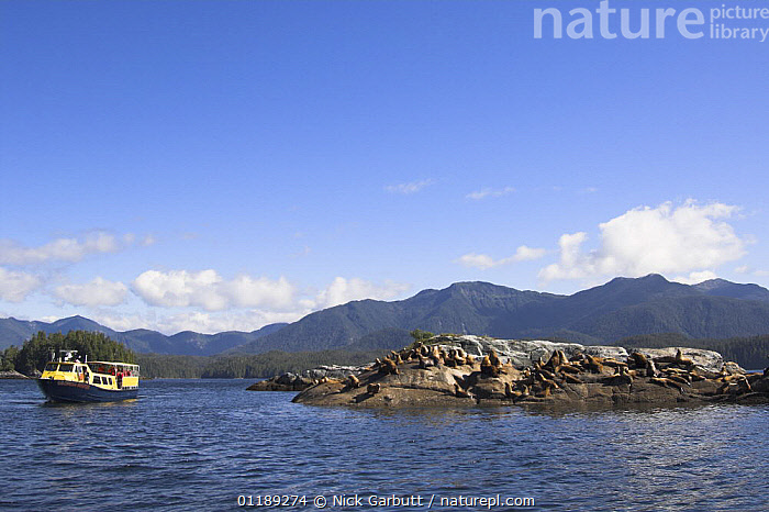 Tourists watch Stellar's Sea Lions (Eumetopias jubatus) on off-shore rocks near Princess Royal Island, Great Bear Rainforest, British Columbia, Canada.  ,  BOATS,COASTS,LANDSCAPES,MAMMALS,PEOPLE,PINNIPEDS,SEALIONS,TOURISM,North America,CANADA, CARNIVORES , CARNIVORES  ,  Nick Garbutt