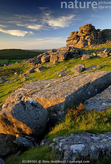 Hound tor, Dartmoor NP, Devon.  ,  DEVON,EUROPE,LANDSCAPES,MOORLAND,RESERVE,ROCK FORMATIONS,TOR,UK,VERTICAL,United Kingdom,Geology,British,ENGLAND  ,  Ross Hoddinott