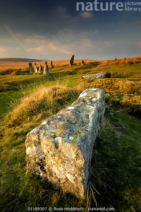 Fallen stone with Scorhill stone circle in distance, Scorhill, Dartmoor NP, Devon, UK.  ,  ANCIENT,CIRCLES,DEVON,EUROPE,LANDSCAPES,MOORLAND,RESERVE,STONES,UK,VERTICAL,United Kingdom,British,ENGLAND  ,  Ross Hoddinott