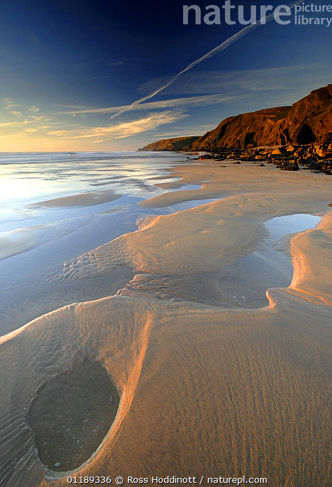 Sandymouth bay (National Trust) at low tide, Cornwall, UK, with pools in sand left by retreating tide  ,  BEACHES,COASTS,CORNWALL,EUROPE,LANDSCAPES,LITTORAL,NT,UK,VERTICAL,United Kingdom,Intertidal,British,ENGLAND, United Kingdom, United Kingdom  ,  Ross Hoddinott