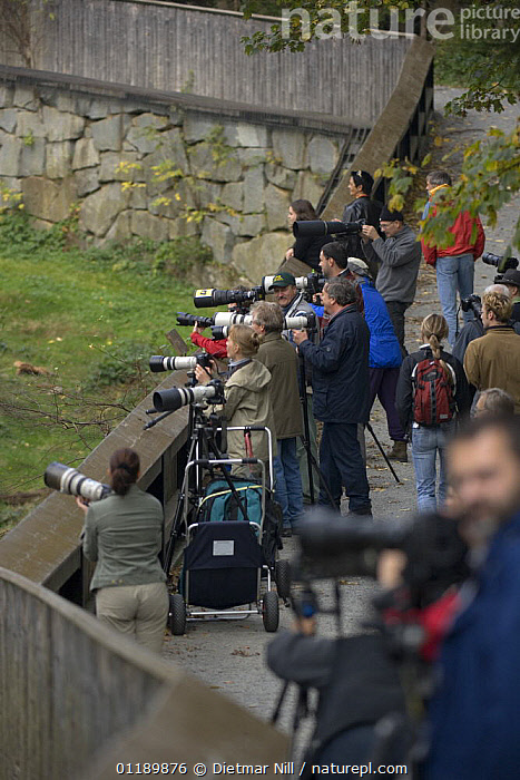 Lots af Photographers at a Zoo in the Bavarian Forest, Germany  ,  BAVARIA,CAMERAS,EUROPE,GROUPS,LEISURE,PEOPLE,PHOTOGRAPHY,VERTICAL,ZOOS  ,  Dietmar Nill