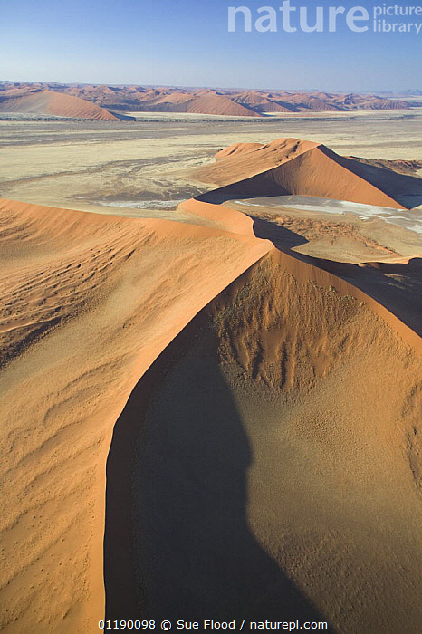 Aerial view of star sand dunes in Sossusvlei, Namibia  ,  AERIALS,AFRICA,DESERTS,GEOLOGY,LANDSCAPES,SAND DUNES,SOUTHERN AFRICA,VERTICAL  ,  Sue Flood