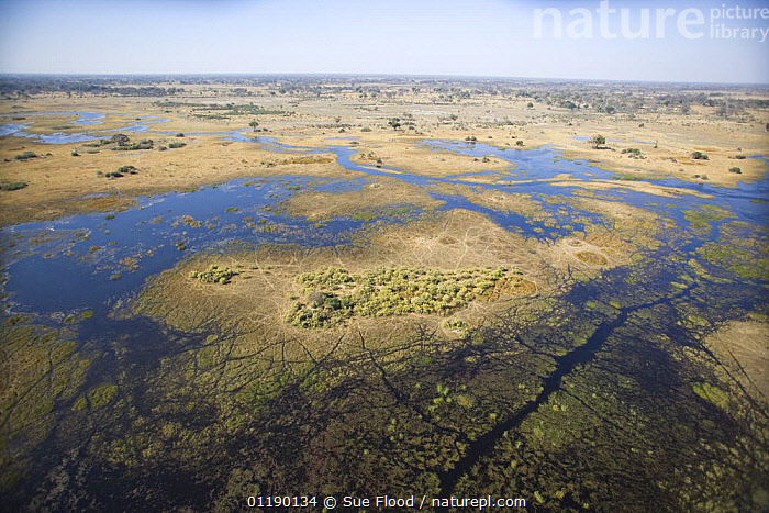 Aerial view of the flooded Okavango delta in August 2007  ,  AERIALS,AFRICA,DELTAS,HABITAT,LANDSCAPES,RIVERS,SOUTHERN AFRICA,TROPICAL,WETLANDS  ,  Sue Flood