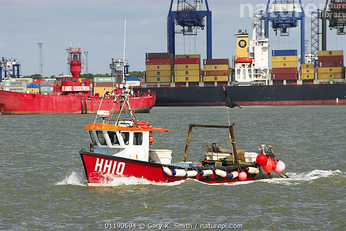 Small fishing vessel coming in to Harwich Port with Felixstowe container docks in background, Suffolk, England, UK  ,  BOATS,CARGO,COMMERCIAL,DOCKS,ENGLAND,EUROPE,FISHING,FREIGHTERS,TRANSPORT,UK,VEHICLES,United Kingdom,British, United Kingdom, United Kingdom  ,  Gary K. Smith