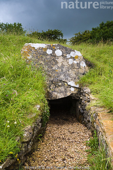 Hetty Pegler's Tump long barrow, prehistoric burial chamber, Cotswolds, Gloucestershire  ,  ANCIENT,ARCHEAOLOGY,BARROWS,EUROPE,LANDSCAPES,OLD,ROCKS,TOURISM,UK,ULEY,VERTICAL,United Kingdom,British  ,  Nick Turner