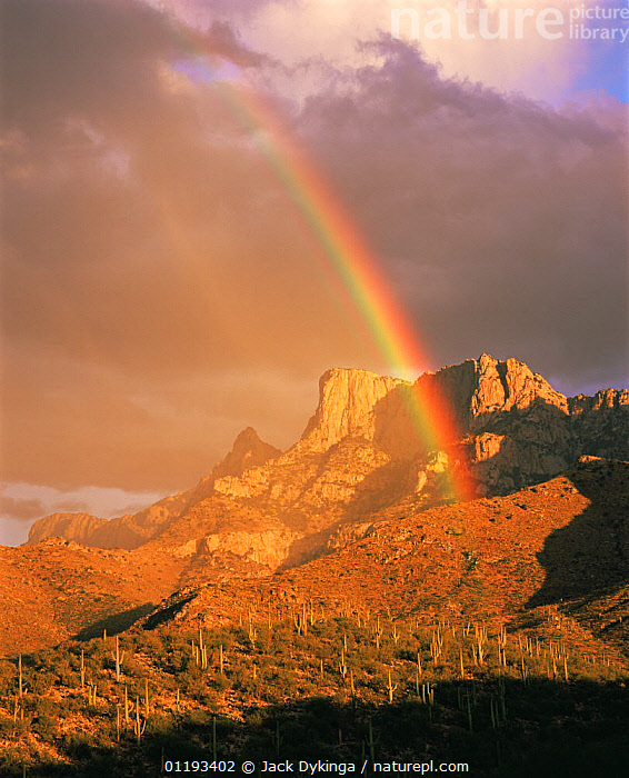 Rainbow over Table Mountain and the Pusch Ridge Wilderness in the Santa Catalina Mountains, Arizona  ,  CACTI,CACTUS,DRAMATIC,LANDSCAPES,MOUNTAINS,NORTH AMERICA,RAINBOWS,ROCK FORMATIONS,VERTICAL,WEATHER,Geology,Plants,USA,Catalogue1  ,  Jack Dykinga
