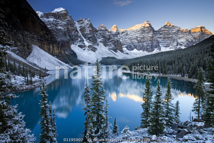 Winter at Moraine Lake, coloured blue by glacial rock flour. Banff National Park, Alberta, Canada  ,  CONIFERS,LANDSCAPES,MOUNTAINS,NORTH AMERICA,NP,PEACEFUL,REFLECTIONS,RESERVE,ROCKIES,SNOW,TREES,WINTER,Concepts,Plants,National Park,CANADA,,Canadian Rocky Mountain Parks World Heritage Site, UNESCO World Heritage Site,Rocky Mountains,Rockies,NP,Reserve,  ,  Adam Burton