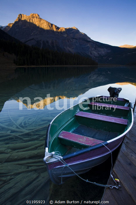 Boat moored at Emerald Lake, Yoho National Park, British Columbia, Canada  ,  BOATS,BRANCHES,CONIFERS,LAKES,LANDSCAPES,MOUNTAINS,NORTH AMERICA,NP,PEACEFUL,REFLECTIONS,RESERVE,ROCKIES,TREES,VERTICAL,Concepts,Plants,National Park,CANADA,,Canadian Rocky Mountain Parks World Heritage Site, UNESCO World Heritage Site,Rocky Mountains,Rockies,  ,  Adam Burton