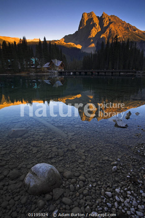 Evening reflections at Emerald Lake, Yoho National Park, British Columbia, Canada  ,  BRANCHES,BRIDGES,BUILDINGS,CONIFERS,LAKES,LANDSCAPES,MOUNTAINS,NORTH AMERICA,NP,REFLECTIONS,RESERVE,ROCKIES,ROCKS,SUNSET,TREES,VERTICAL,Plants,National Park,CANADA,,Canadian Rocky Mountain Parks World Heritage Site, UNESCO World Heritage Site,Rocky Mountains,Rockies,  ,  Adam Burton