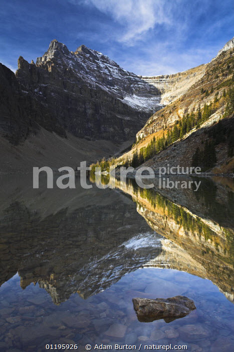 Snowy mountains and conifer trees reflected in Lake Agnes, Banff National Park, Alberta, Canada  ,  CONIFERS,LAKES,LANDSCAPES,MOUNTAINS,NORTH AMERICA,NP,PATTERNS,REFLECTIONS,RESERVE,ROCKS,VERTICAL,National Park,CANADA,,Canadian Rocky Mountain Parks World Heritage Site, UNESCO World Heritage Site,Rocky Mountains,Rockies,NP,Reserve,  ,  Adam Burton