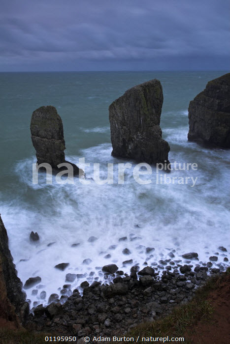 Rock stacks guard the entrance to a secluded Pembrokeshire cove, Wales  ,  ATMOSPHERIC,COASTS,EUROPE,GEOLOGY,LANDSCAPES,ROCK FORMATIONS,ROCKS,SEA,STACK ROCKS,UK,VERTICAL,WAVES,United Kingdom,British,WALES, United Kingdom, United Kingdom, United Kingdom  ,  Adam Burton