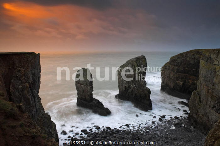 Rock stacks guard the entrance to a secluded Pembrokeshire cove, Wales  ,  ATMOSPHERIC,COASTS,DRAMATIC,EUROPE,GEOLOGY,LANDSCAPES,ROCK FORMATIONS,ROCKS,SEA,STACK,UK,WAVES,United Kingdom,British,WALES,CONCEPTS, United Kingdom, United Kingdom, United Kingdom  ,  Adam Burton