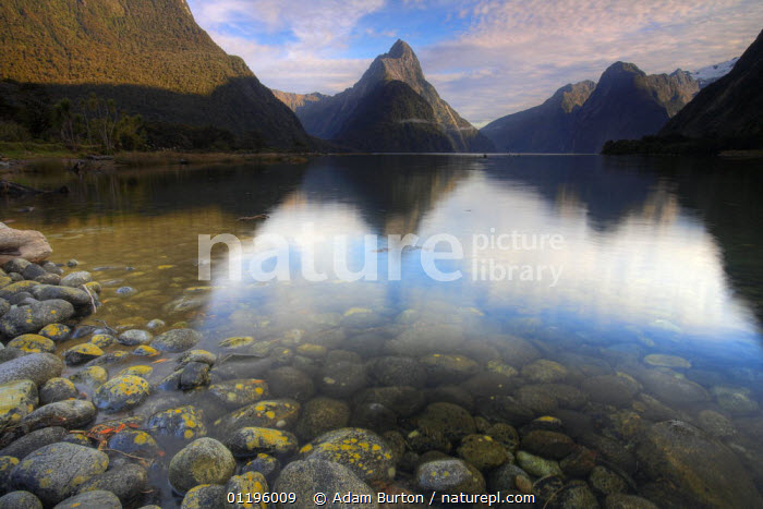 Mitre Peak reflecting in Milford Sound, Fiordlands National Park, South Island, New Zealand  ,  AUSTRALASIA,FIORDS,FJORDS,LANDSCAPES,MOUNTAINS,NEW ZEALAND,NP,REFLECTIONS,RESERVE,ROCKS,National Park  ,  Adam Burton